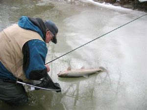 steelhead-on-ice